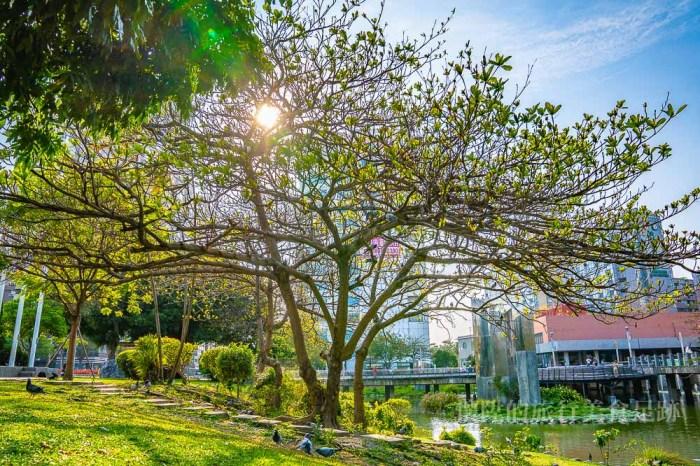 【台南奇景】欸!?樹上長滿了鴿子?城市裡的生態小旅行:台南文化中心鴿子樹