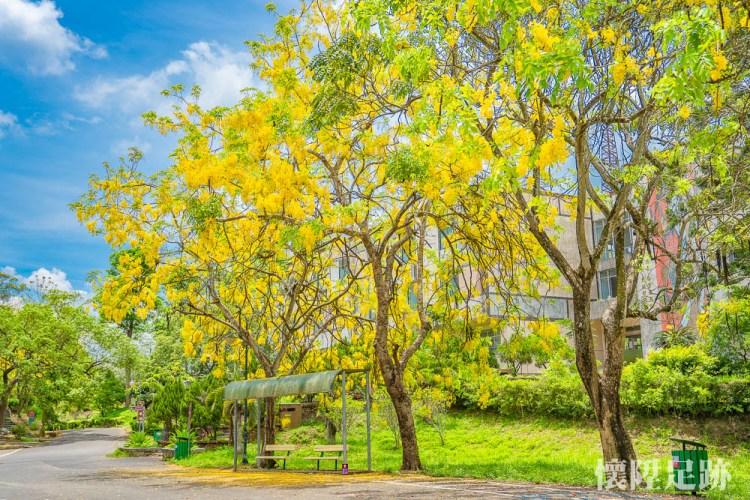 好美!五個最浪漫的虎頭埤阿勃勒拍攝點,不怕在廣大的園區內迷路了!收藏最美的虎頭埤阿勃勒花季