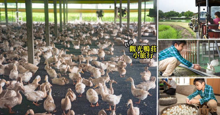台南鴨莊 到養鴨人家的家玩耍,親手做顆鹹鴨蛋,體驗親子農村樂,還有好玩戶外遊樂設施 台南親子景點