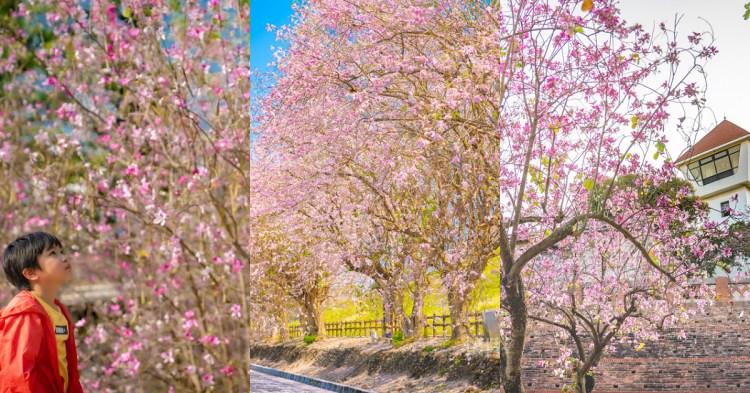 台南賞花|台南賞櫻小旅行!三個美麗的浪漫粉紅台南賞花點,城堡裡盛開的粉色南洋櫻