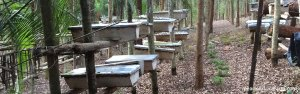bee-farming-at-pearl-of-africa-farm |pearl of Africa farm