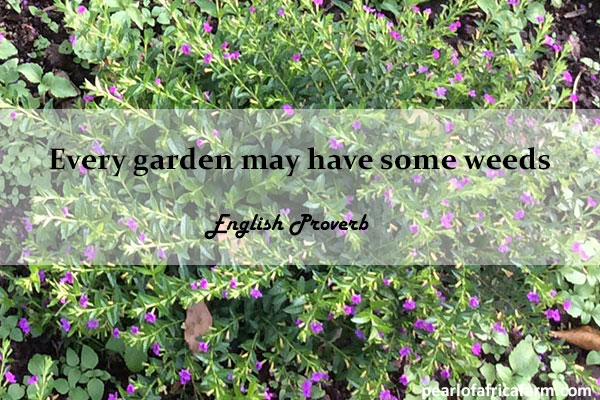 Every garden may have some weeds