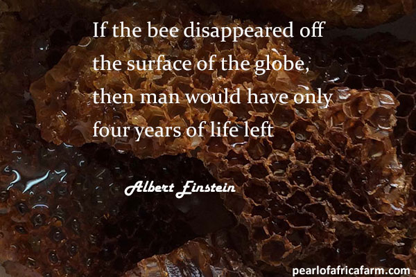 if-the-bee-disappeared-off-the-surface-of-the-globe,-then-man-would-have-only-four-years-of-life-left