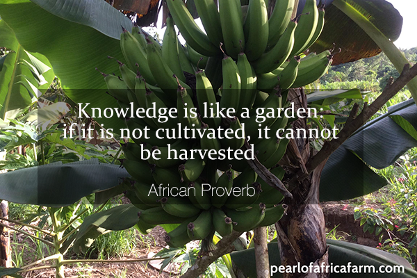 Knowledge-is-like-a-garden---if-it-is-not-cultivated,-it-cannot-be-harvested