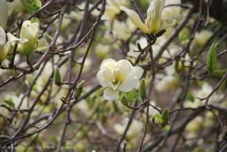 magnolia butter perfect