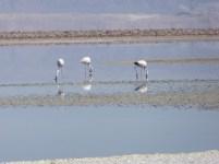 Dreams come true, we saw the flamingos!