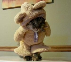 Pebbles the Blind Cat teddy bear
