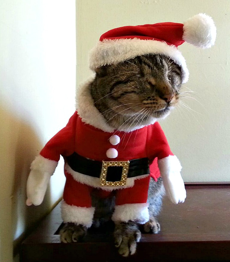 Pebbles the Blind Cat Santa Paws