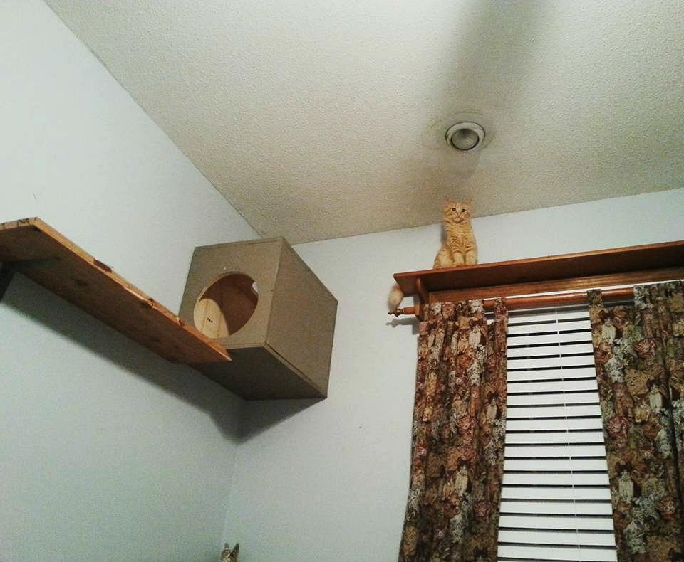 Cat rules - build high