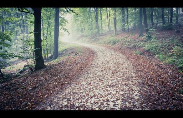 Herbst im Taunus