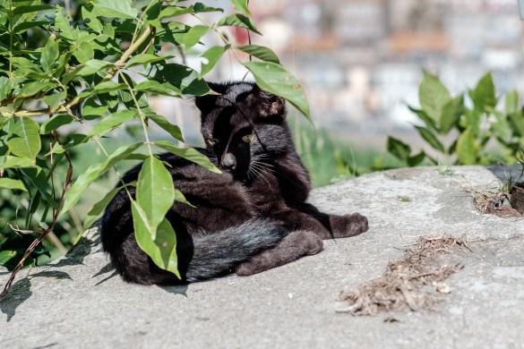 Katzen Potos