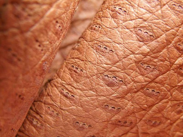 peccary-leather-details