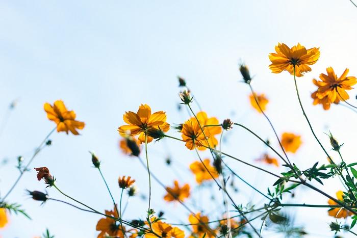 Coups de coeur du printemps - Obsessions printanières
