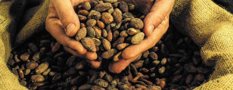 chocolate-and-cacao-beans
