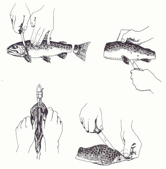 préparation fumage d'un poisson entier