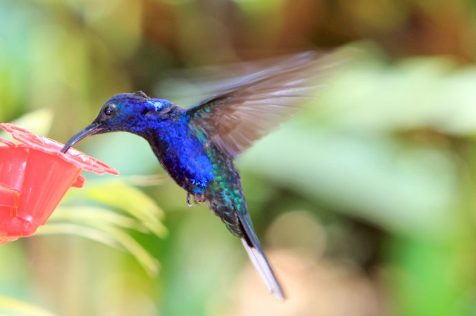 Hummingbirds everywhere.