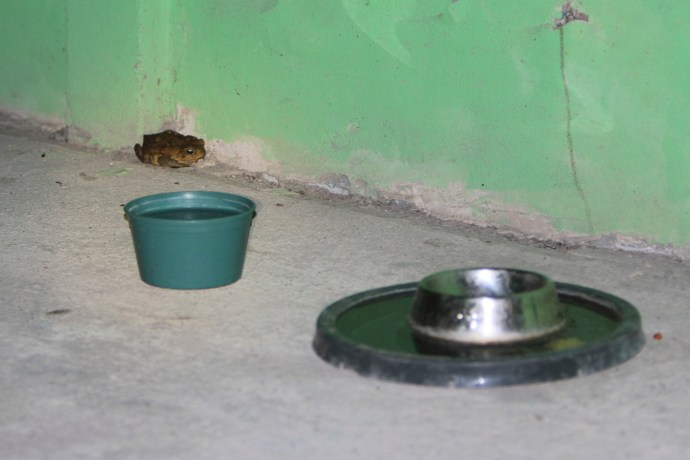 Toad had waited patiently while Odie finished his food.