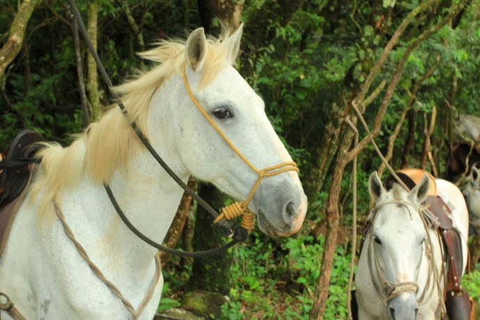 Beautiful looking and calm demeanour horses.