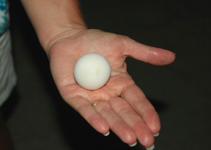 Egg of an Olive Ridley Turtle