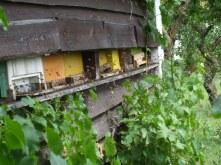 Doras Bauerngarten in Hainert - Bienen