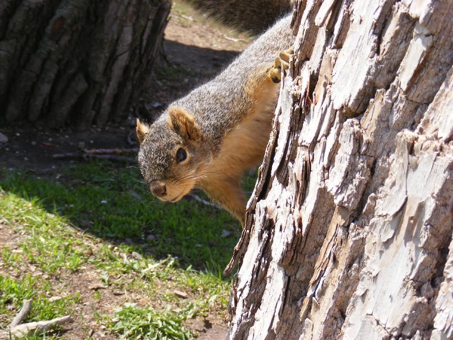 Pecos SWW Favorite Pictures  Fox Squirrels