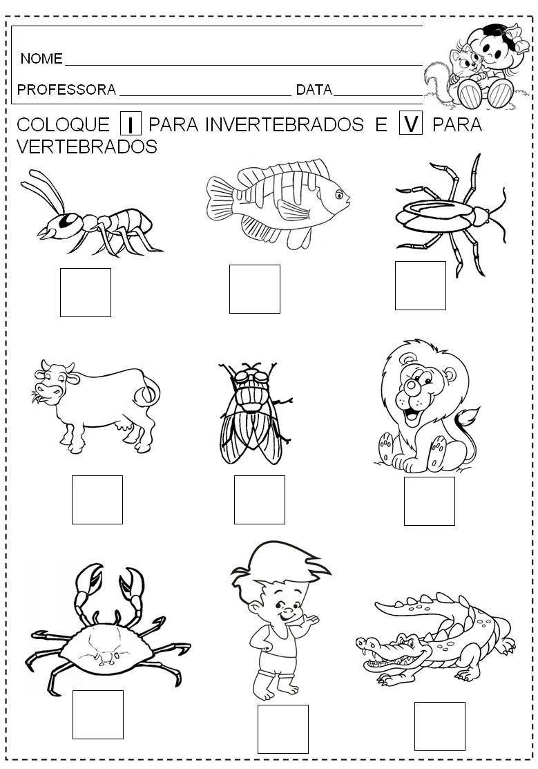 Plano de aula: Animais vertebrados e invertebrados