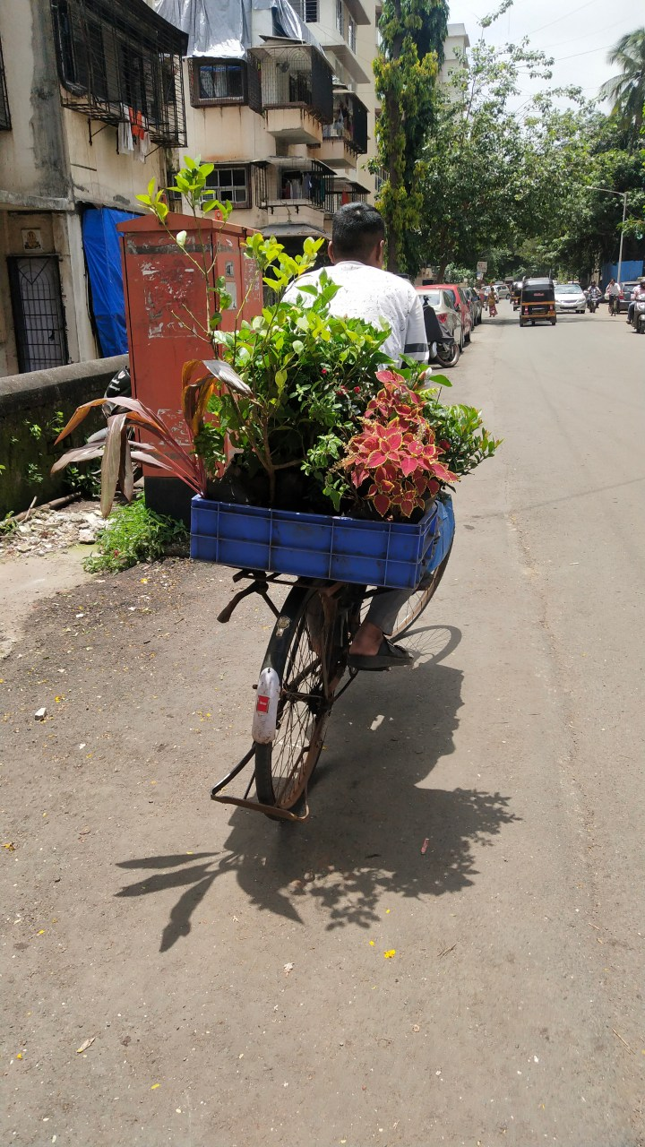 PLANT BOYS: DELIVERING FRESH OXYGEN ON BICYCLES