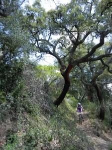 Pedalea Andalucía. Travesía en btt Pueblos Blancos. P.N. Grazalema-Alcornocales