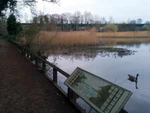 The path around Fleet Pond is lovely. Now with a view of The Great Wall of Fleet.