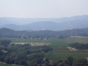 Vineyards on the Mendocino County side