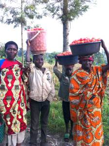 Carrying tomatoes to market