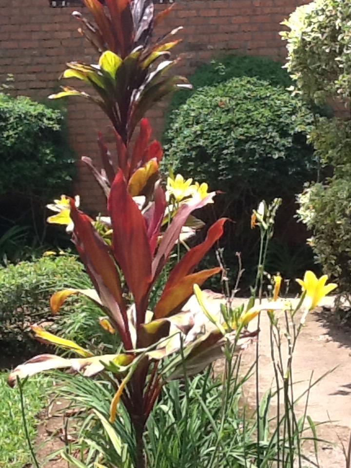 Garden at Musanze