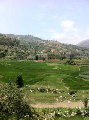 Rice paddies near River