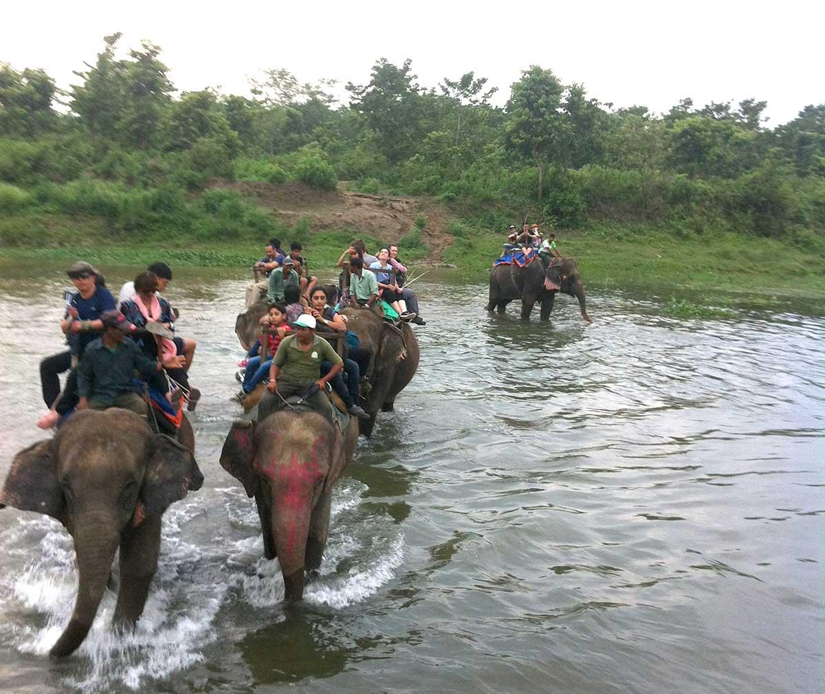 Elephant crossing Chitwan