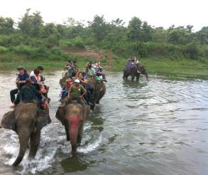 Elephant crossing Chitwan