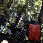bike touring redwoods