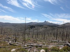 Three Fingered Jack peaking out over the burnout area.