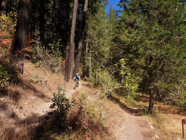 The final switchback before a nice gradual descent for the last few miles into Oakridge.