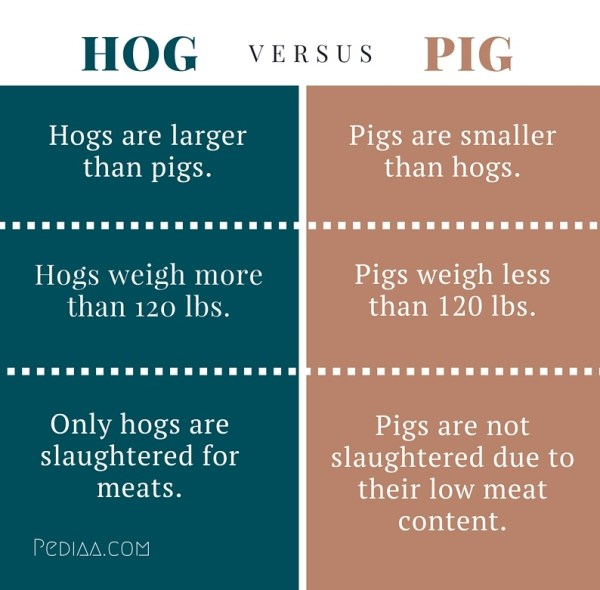 Difference Between Hog and Pig PediaaCom