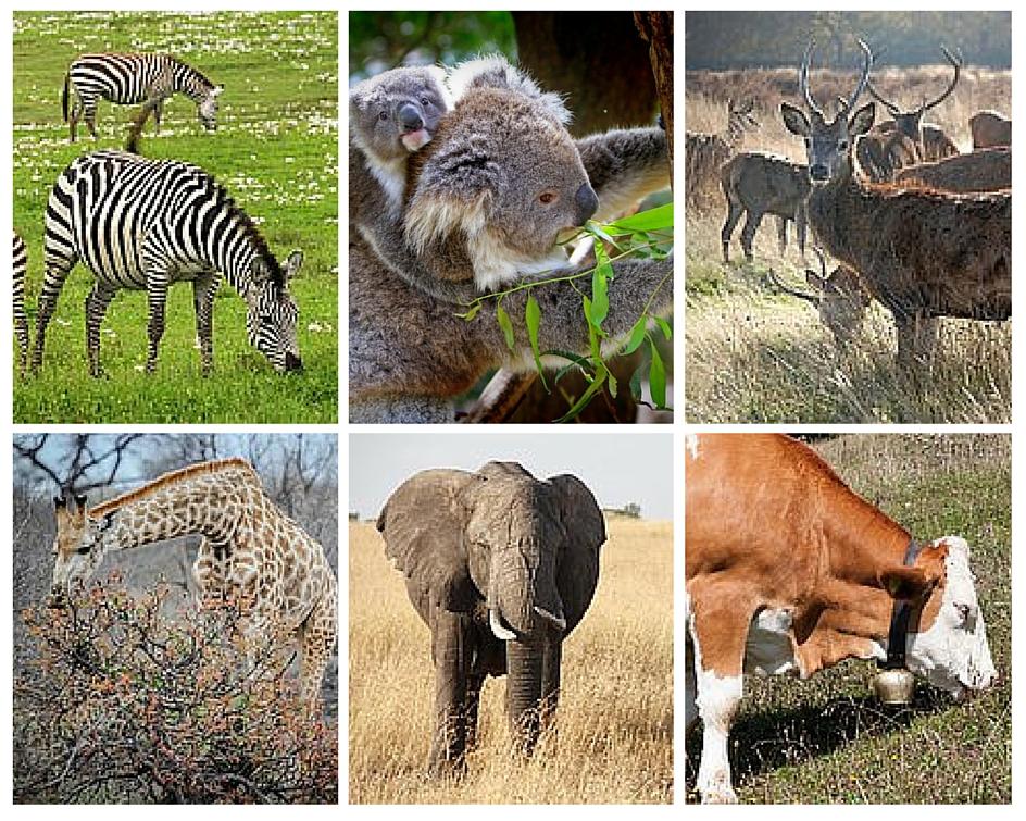 Difference Between Herbivores Carnivores And Omnivores