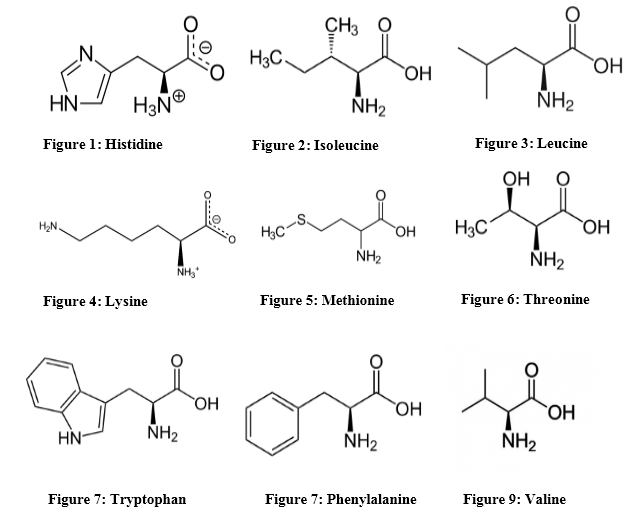 Difference Between Essential and Nonessential Amino Acids