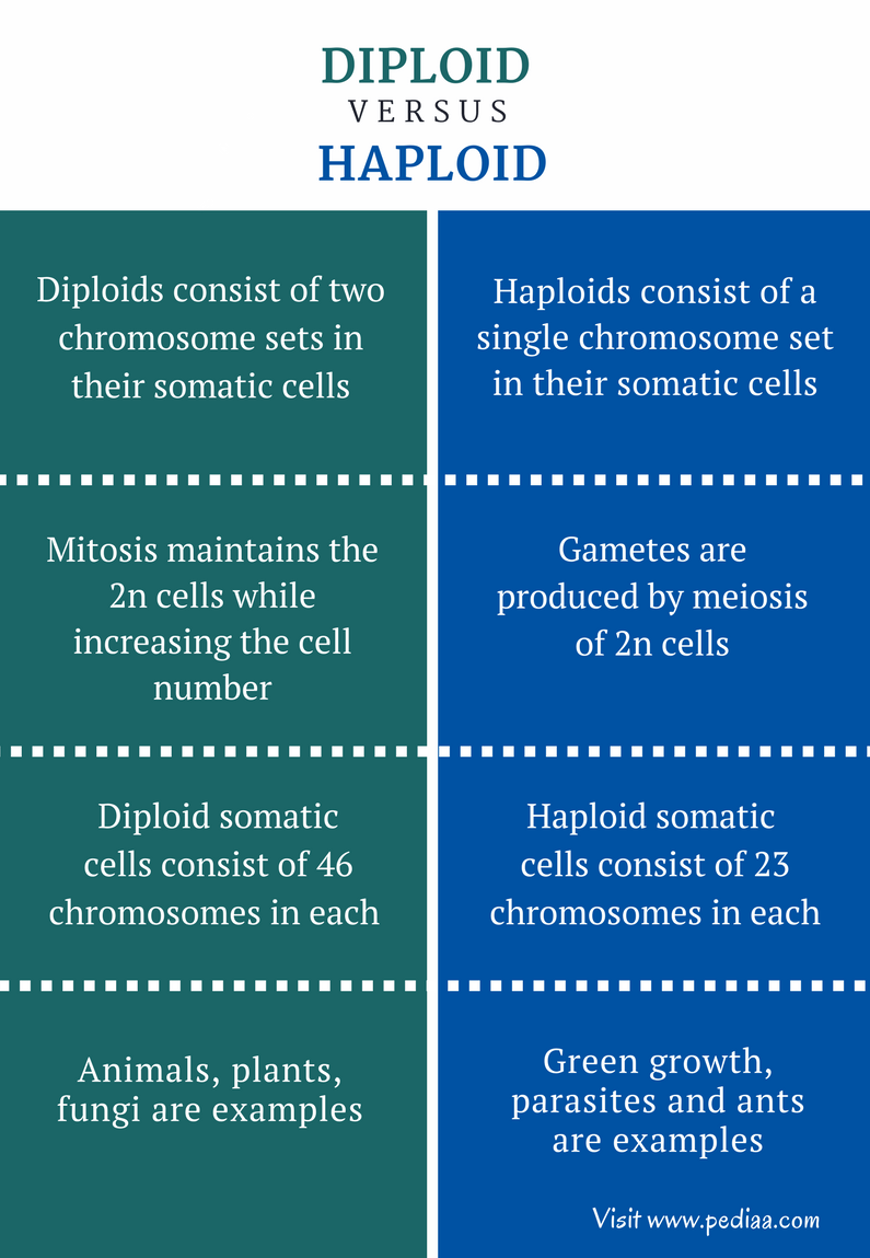 Chromosome Set Difference Between Diploid And Haploid Pediaa Com