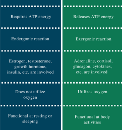 difference between anabolism and catabolism [ 799 x 1801 Pixel ]