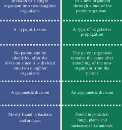 difference between binary fission and budding comparison summary [ 795 x 1337 Pixel ]
