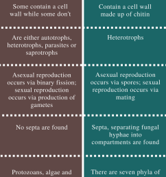 difference between protists and fungi [ 799 x 1473 Pixel ]
