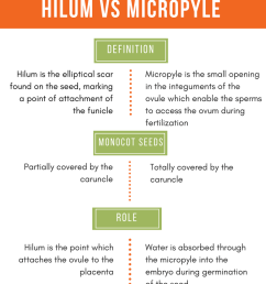 difference between hilum and micropyle comparison summary [ 787 x 1037 Pixel ]