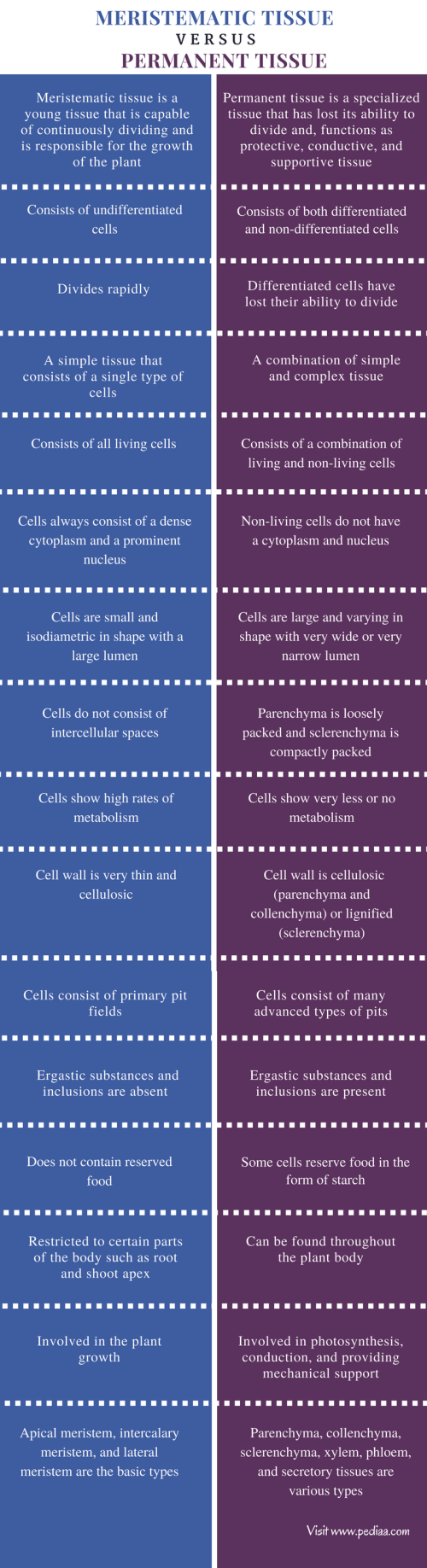 small resolution of difference between meristematic tissue and permanent tissue