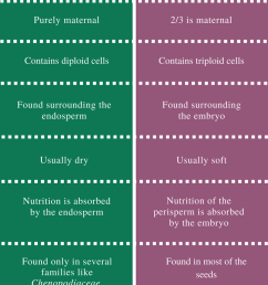 difference between perisperm and endosperm [ 797 x 1541 Pixel ]
