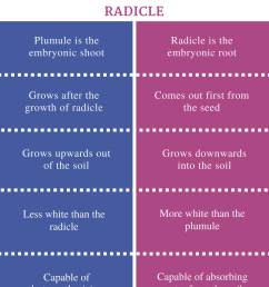 difference between plumule and radicle [ 799 x 1093 Pixel ]
