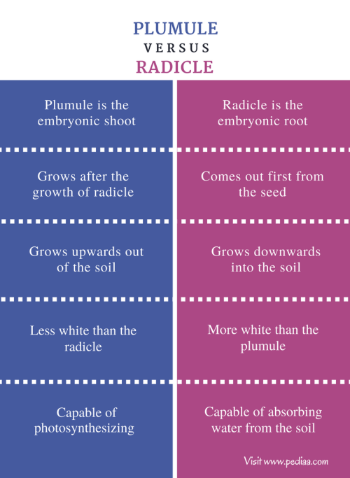 small resolution of difference between plumule and radicle